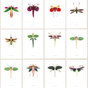 Småkort Blomsterfjäril i passepartout 13×18 cm